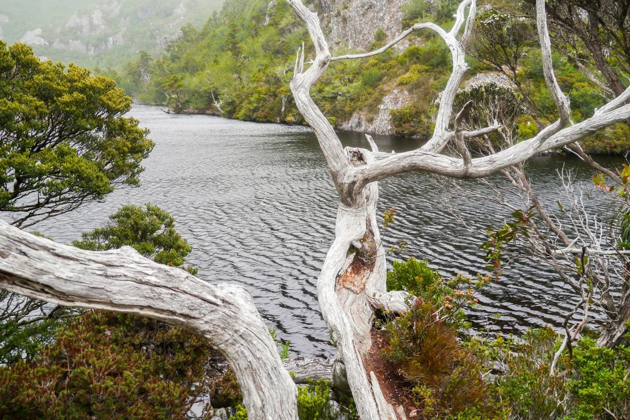 Overland Track Ronny Creek - Waterfall Valley Hut